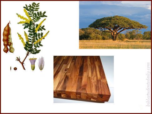 2-b-acacia-wood-with-address