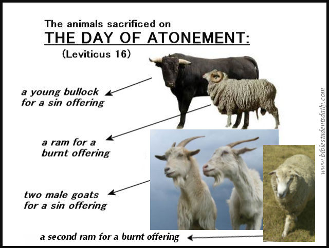 day of atonement sacrifices: text: leviticus 16 essay Erev yom kippur (lit eve [of] day [of] atonement) leviticus 16:29 mandates establishment of this holy day on the it focuses on christ's sacrifice and.