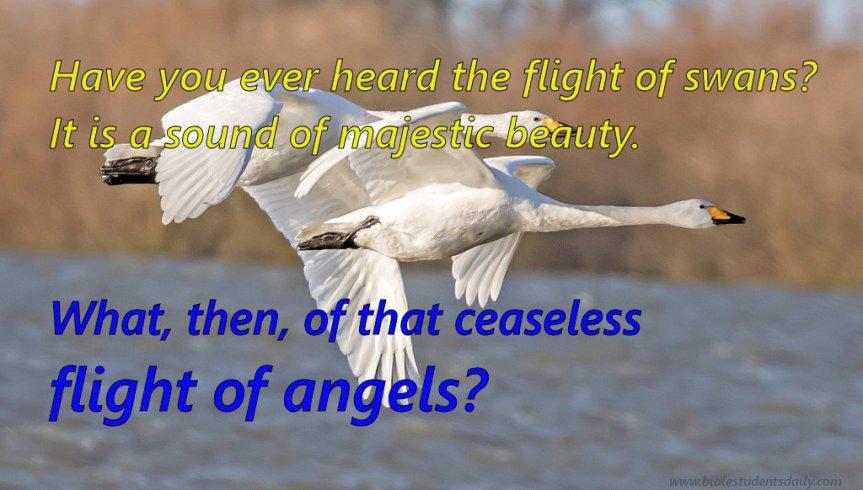 swans flighing.jpg